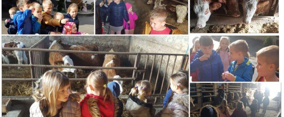 Suživot djece i životinja u ruralnoj sredini